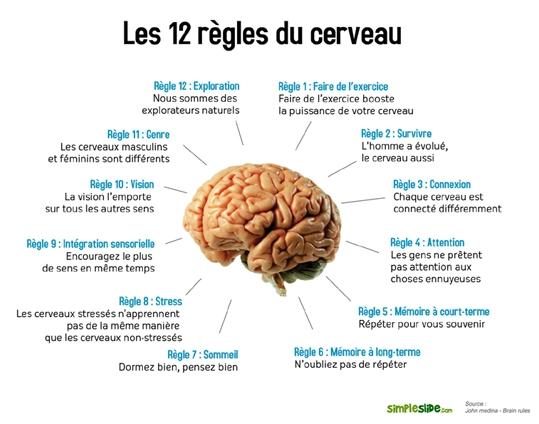 Comment fonctionne le cerveau humain et comment en tirer - Comment faire plaisir a mon mari au lit ...