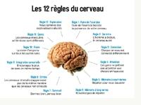 mini-cerveau