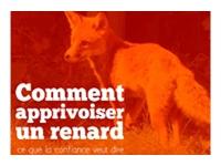 mini-renard1
